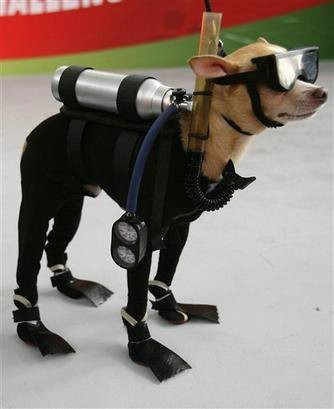 Dog in Scuba Diving Suit